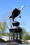 Vulture Maquette 1