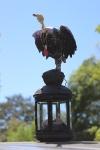 Vulture Maquette 2